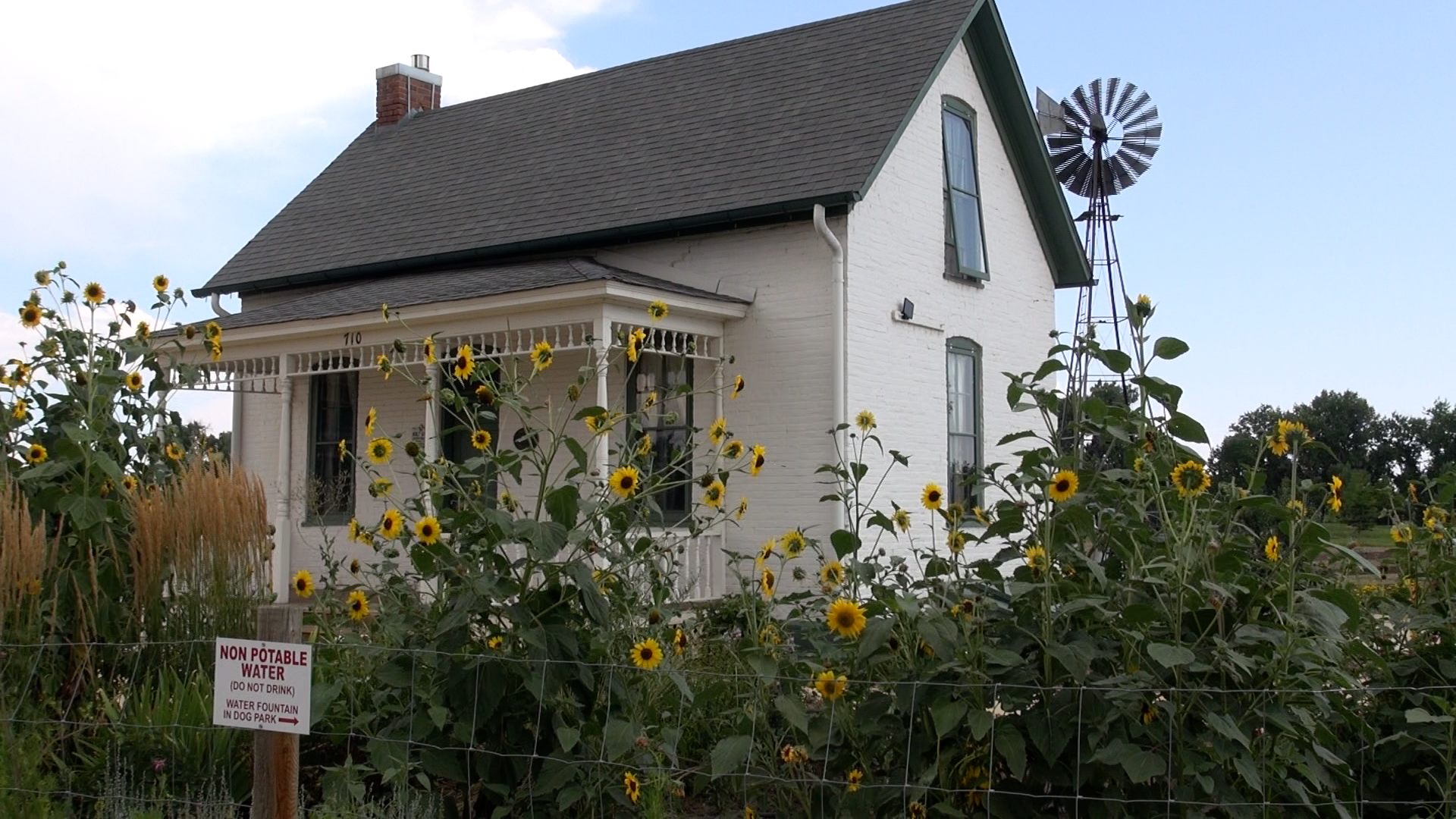 house_and_sunflowers
