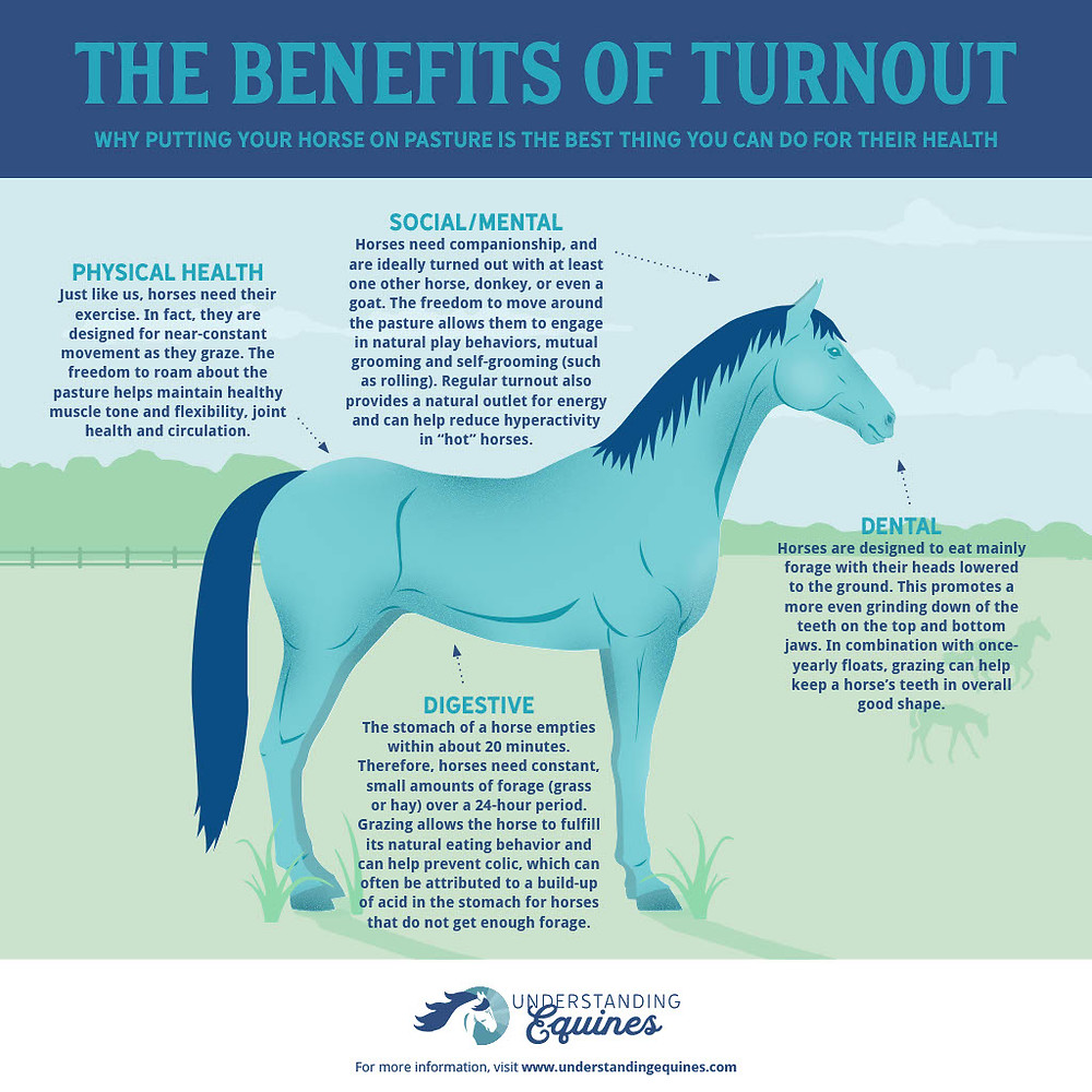 the benefits of turnout infographic