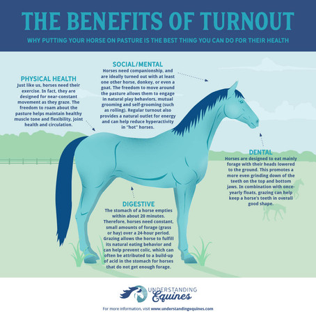 Why All Horses Need Turnout