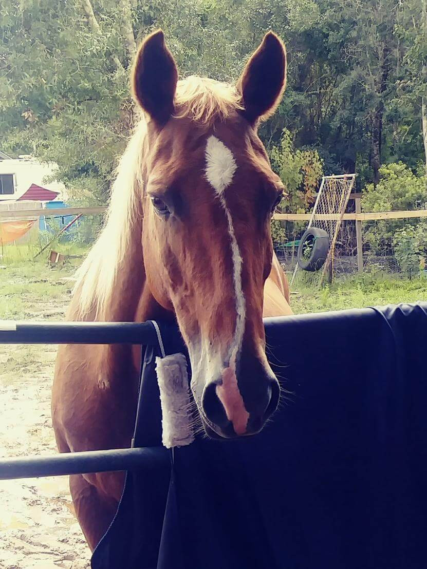brown horse with white stripe on face
