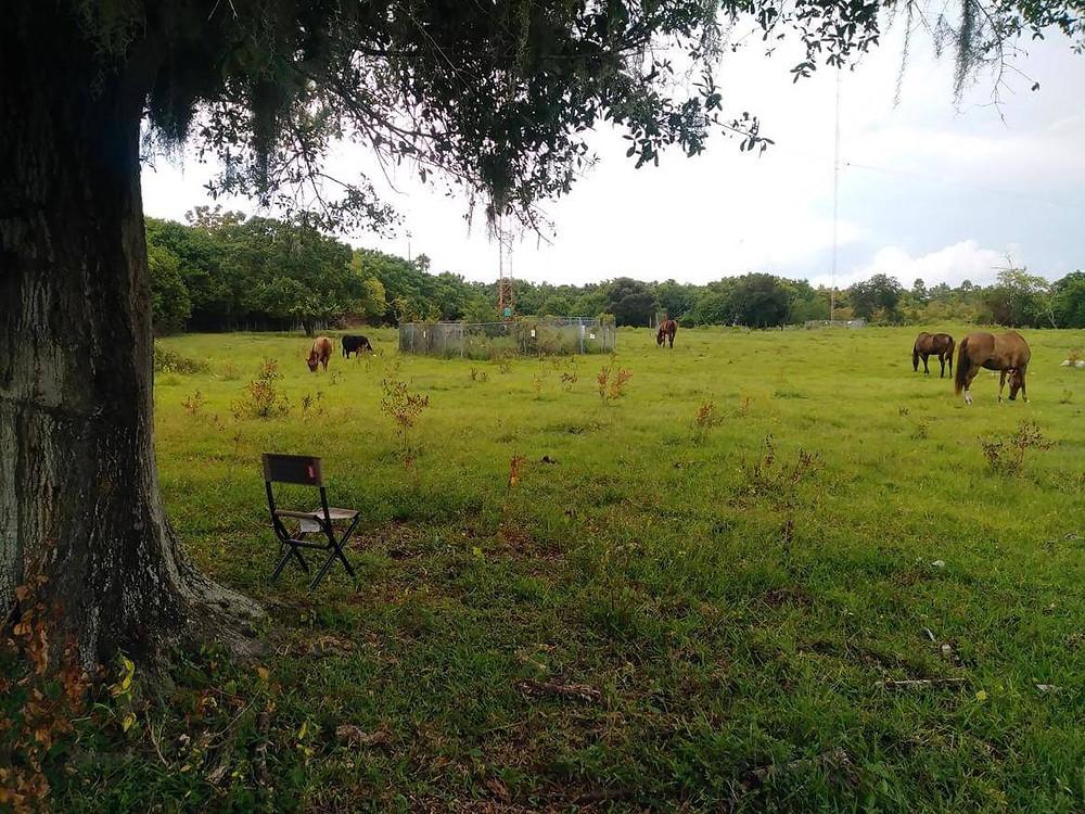 horses grazing in green field