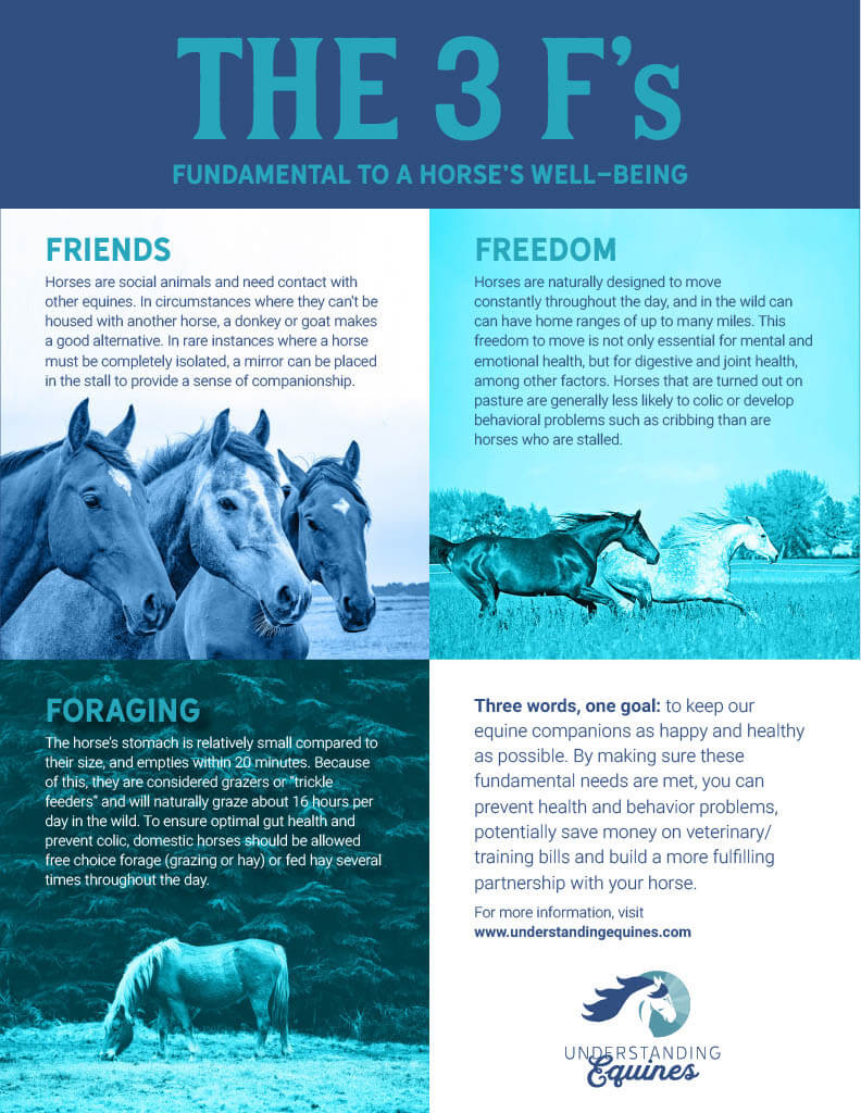 horse infographic friends freedom foraging