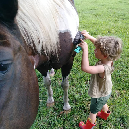 Counter-Conditioning: Or, How to Get Horses to Like Things They Usually Hate