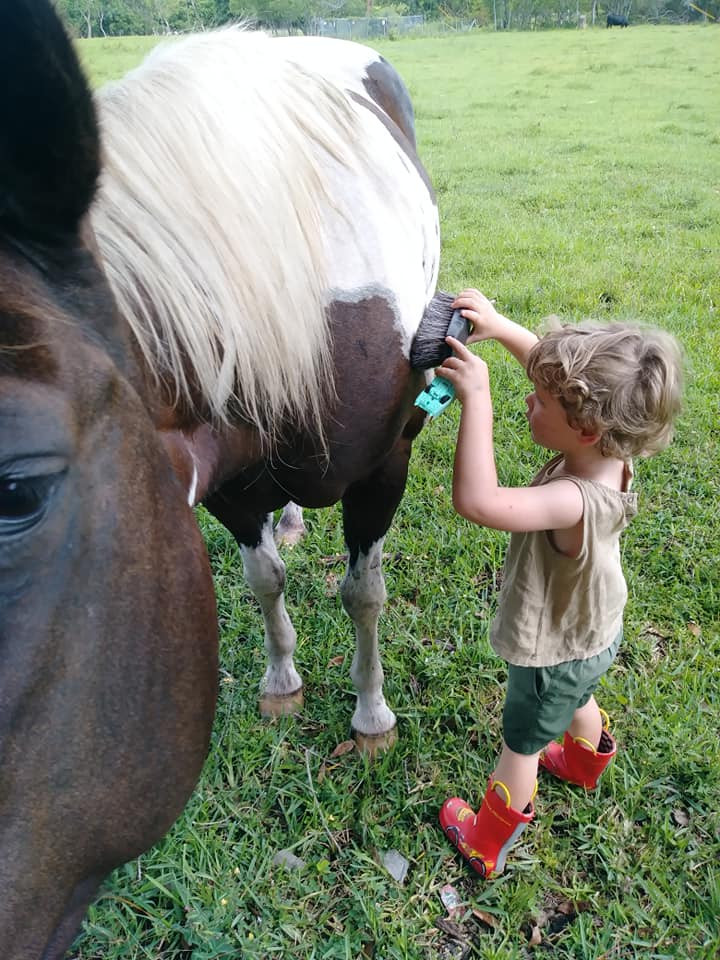 boy with blond curls brushing brown white horse