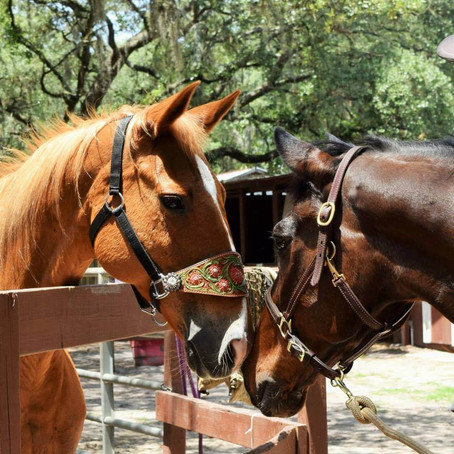 Horses Need Social Contact with Other Equines