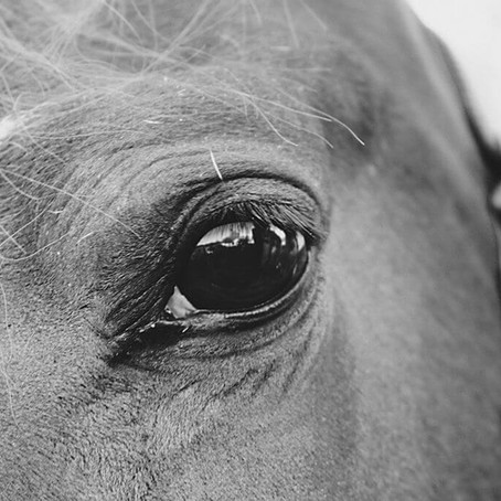 Study Shows Horses Can Identify Their Owner Through a Photograph Last Seen 6 Months Earlier
