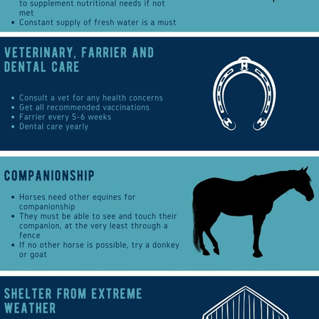 What Horses Really Need From Humans