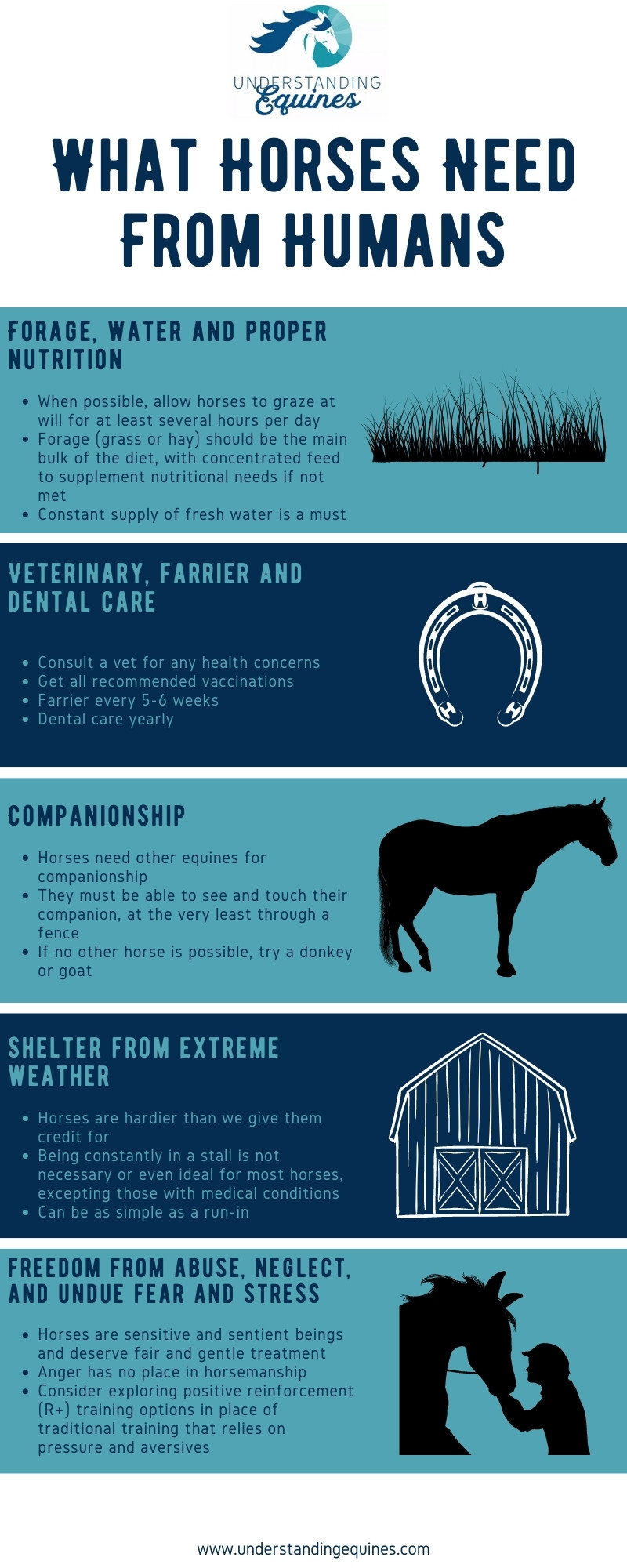 what horses need from humans infographic