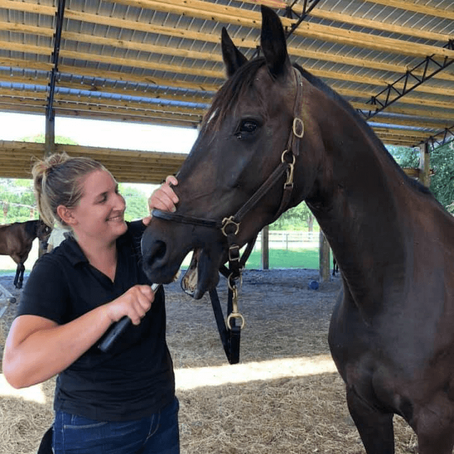 Your Questions About Sedation-Free Equine Dentistry, Answered: An Interview with Eleni Ingalls