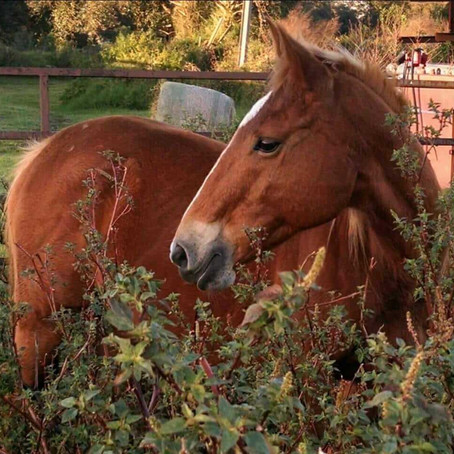 Case Study: Recovering Human Touch with a Traumatized Rescue Horse