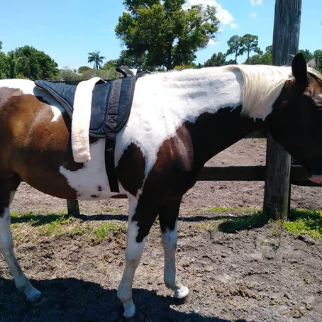 Clicker Training: Humane, Effective and Highly Suggested