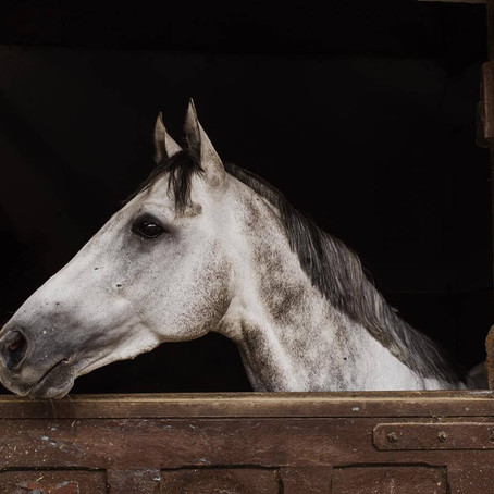 There is No Such Thing As a Problem Horse - Just Problem Situations