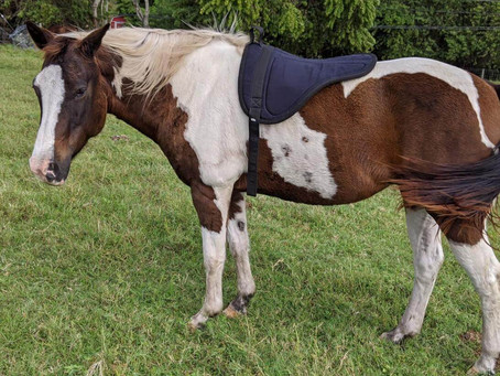 What Motivates Horses, and Why It Matters