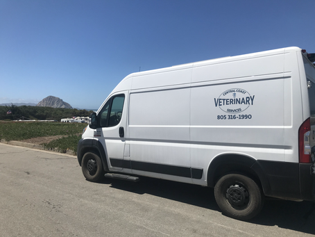 Central Coast Veterinary Services Expands Equine and Small Animal Mobile Care in SLO County
