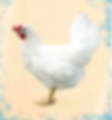 Курица Декалб Уайт