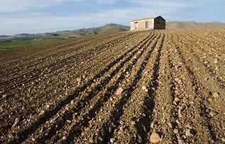 Terreni in vendita a Torre del Greco