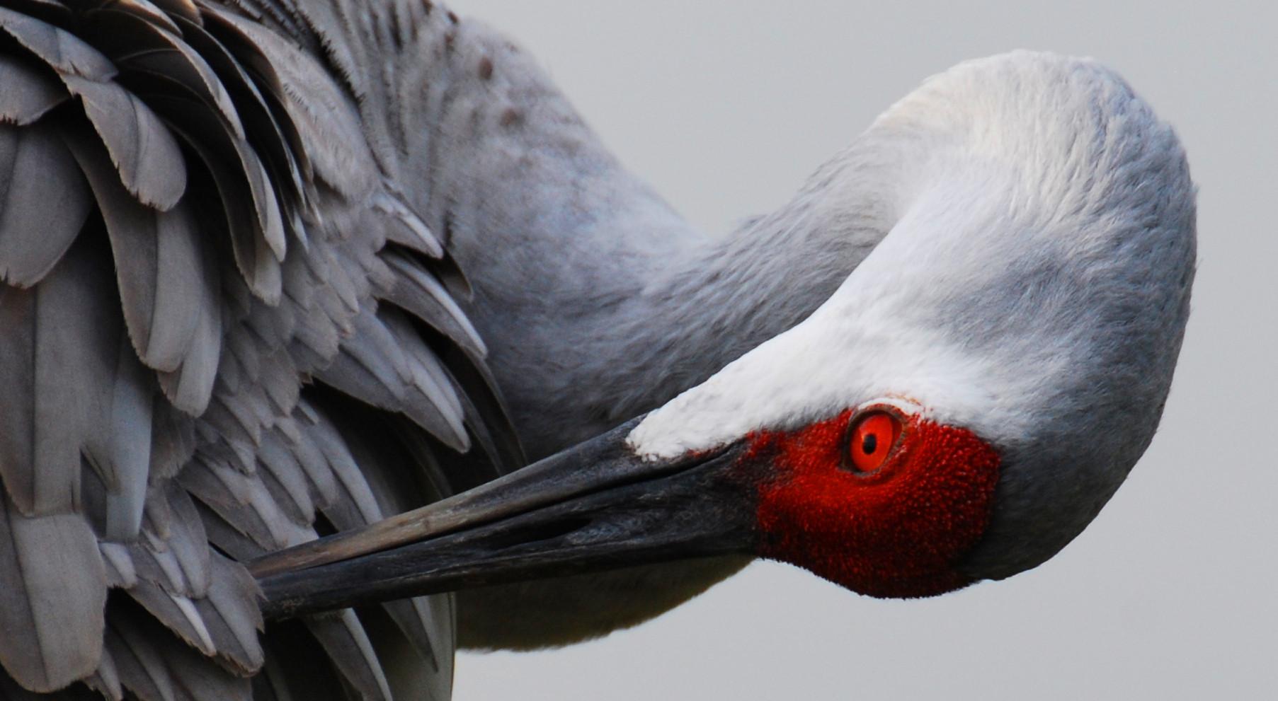 Crane Your Neck