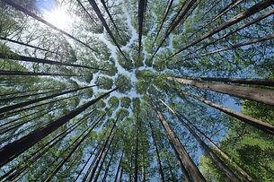 tree-4450514_1280.jpg