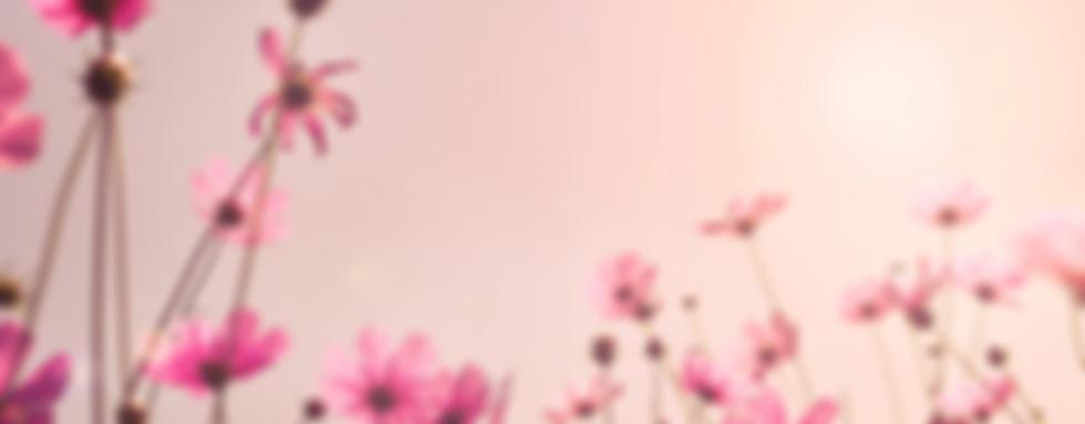 fleurs rose.png