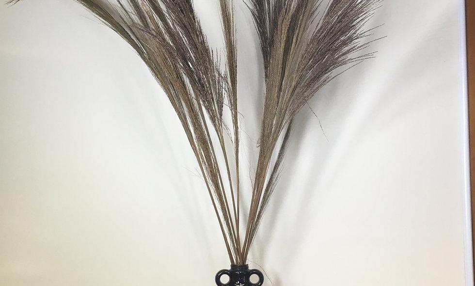 Chinese Broom Stem