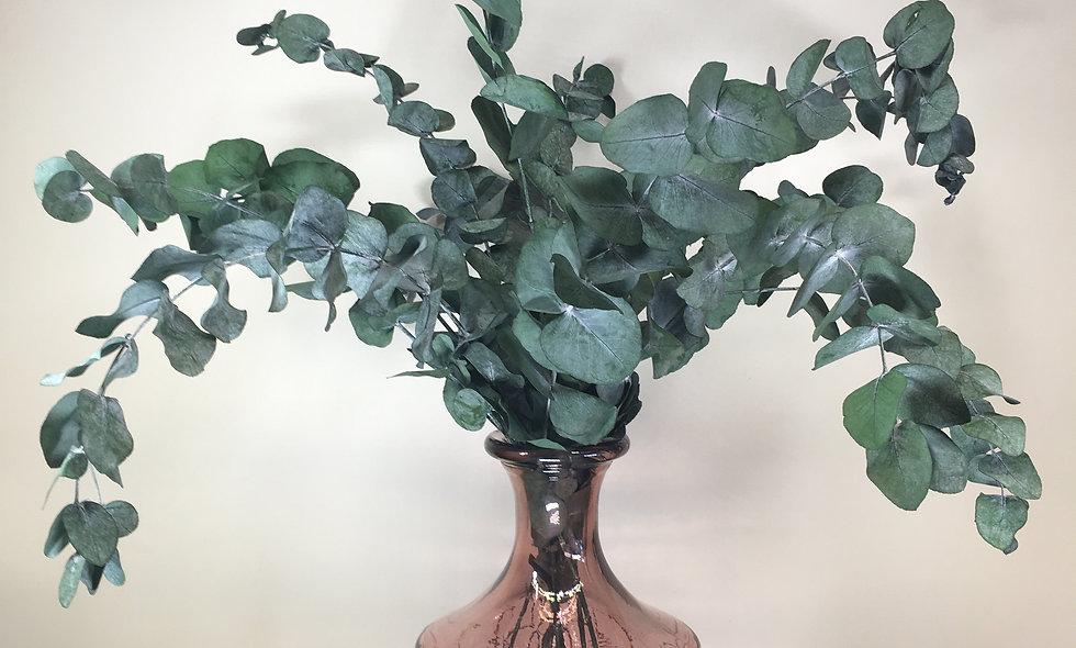 Preserved Eucalyptus Stem