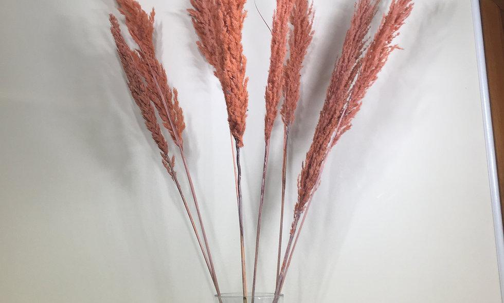 Dried Pampas Stem