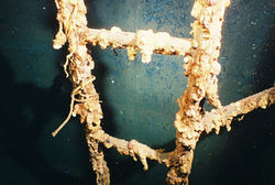 Corroded Ladder