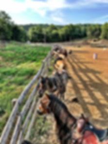 bob benz, juro stables, mt. juliet, tame the stang, mustang, horseback riding, pinnacle stables, jason lancaster, christiana, springfield, training, boarding, horse, mare, mustang, rutherford, robertson, nashville, trail riding, kentucky, tennessee, erica jo edmonds, joshua lyons, trevecca nazarene, extreme mustang makeover, MTSU, bonnaroo