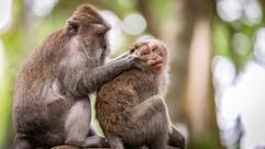 monkeys-4550159_1280.jpg