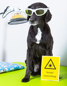 cute dog with protecting glasses and las