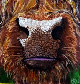 wooly coo nose.jpg