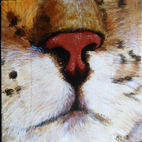 catnose.jpg