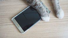 Cat paws on a smart phone..jpg