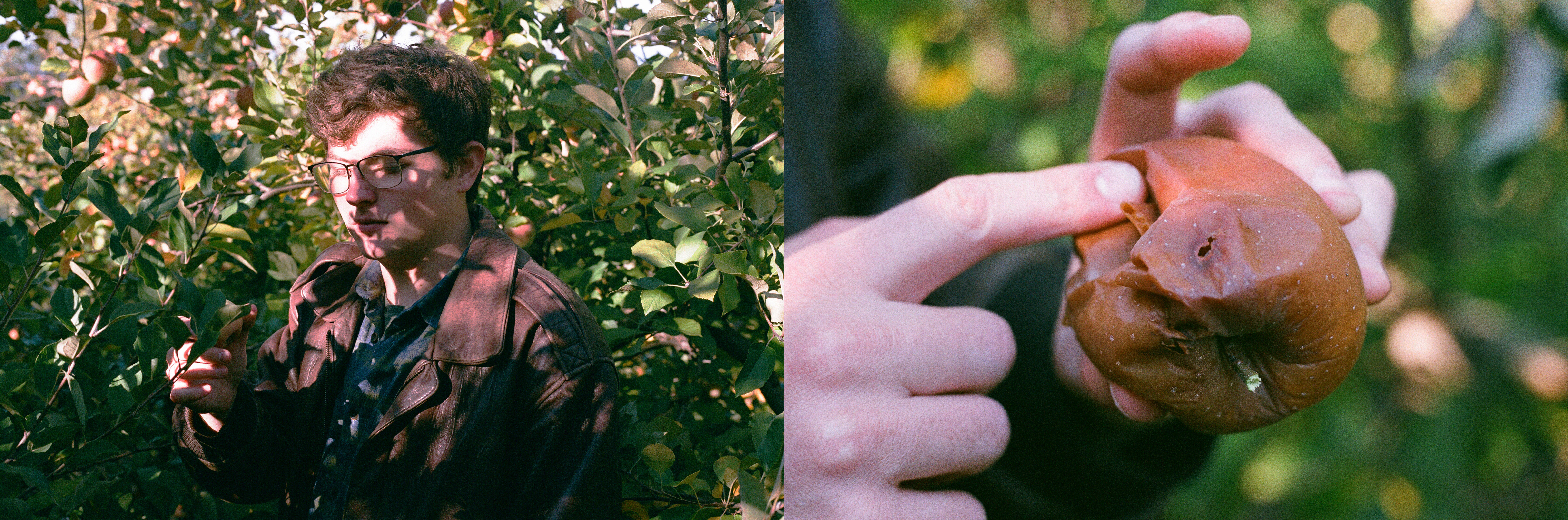 contemporary fine art photography portrait of man in apple orchard holding apple sexualized fruit