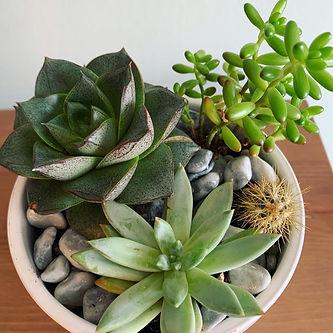 house plants from florist shop in warrington