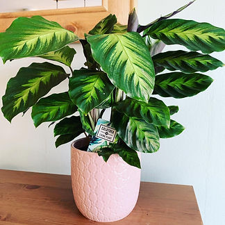house plants in warrington. flower and plant delivery warrington.