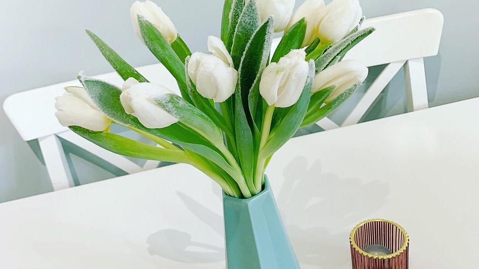 Winter Frost Premium Tulips