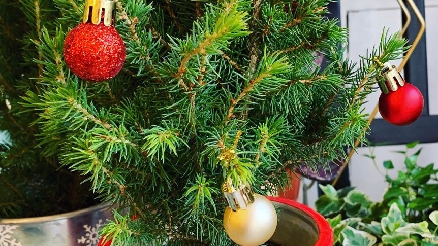 "Red ""HoHo"" Santa Belt Miniature Christmas Tree"