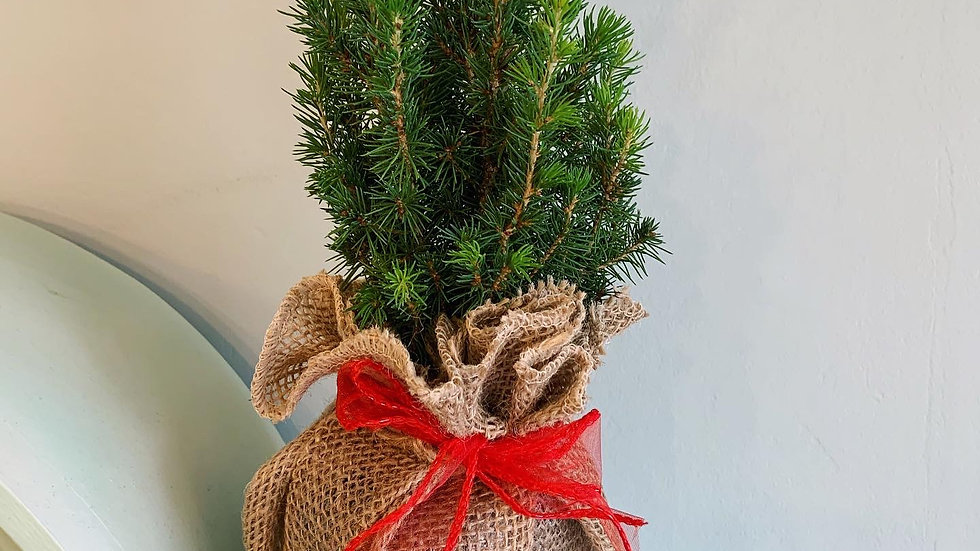 Mini Christmas Tree in Hessian