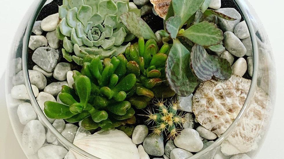 20cm Bowl Terrarium