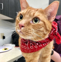 This cat knows how to rock a bandanna!