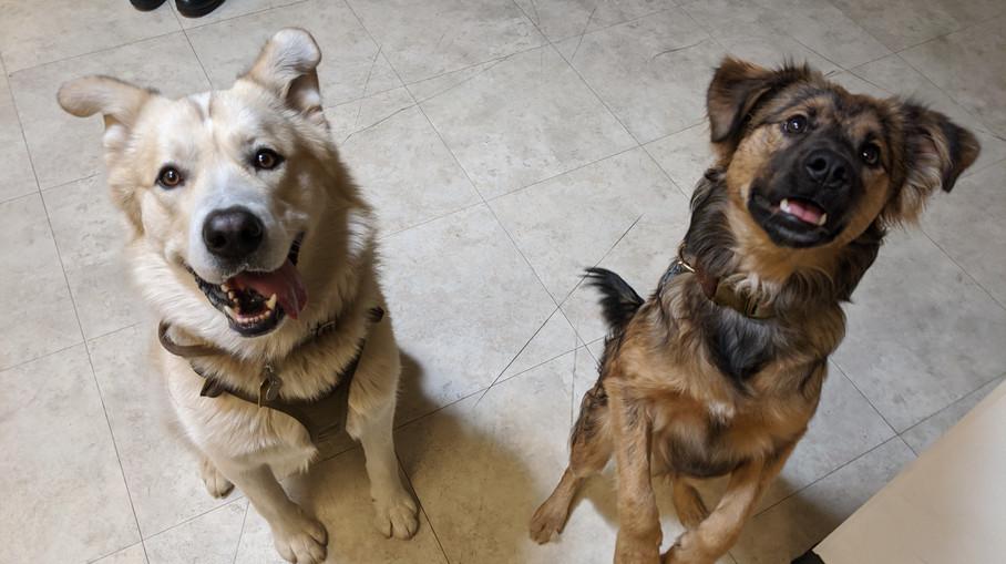 Dash & Charlie!