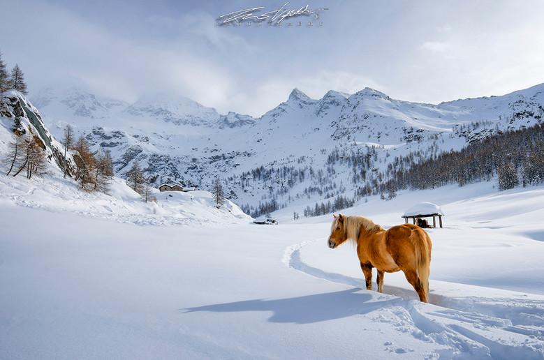 Horse in Cheneil