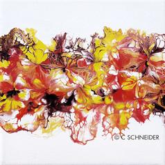 """""""Scarlett Corolla 2"""" © C Schneider"""
