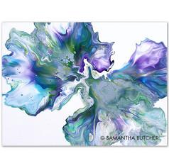 """""""Silvery Viola"""" © Samantha Butcher"""
