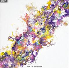 """""""Spring Corolla"""" © C Schneider"""