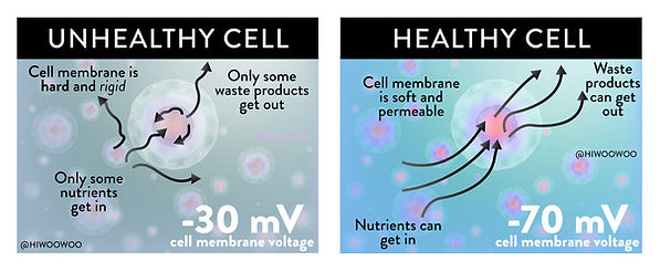 healy cells.jpg