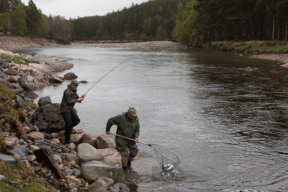 Salmon Fishing River Dee Scotland