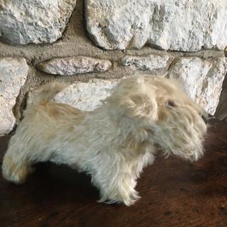 Vintage Sealyham Terrier