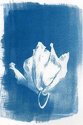 Theresa.Tarara.Petal Cyanotype.jpg